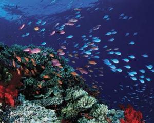 Recifurile de corali ar putea disparea pana in 2050