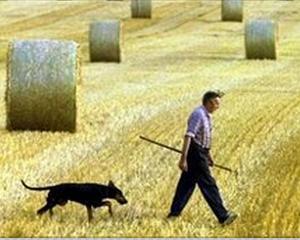 Prioritatile MADR: Dezvoltarea locurilor de munca in mediul rural si cresterea suprafetei cultivate