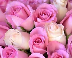 Sa nu uitam nicicand sa iubim trandafirii din import!