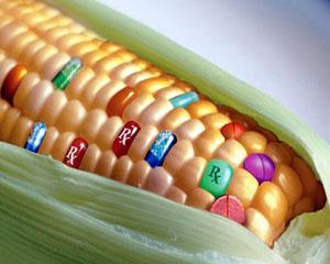Suprafetele cultivate cu OMG au progresat cu 6%
