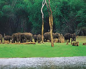 World Wide Fund for Nature implineste 50 de ani
