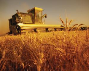 Analize Manager.ro: Cei trei agricultori ai Romaniei