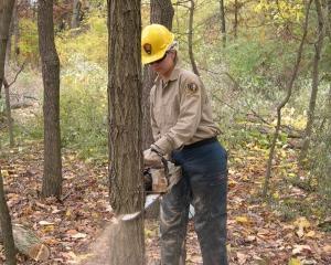 Lasati copacii sa creasca! Utilizatorii nu mai cumpara ziare, ci acceseaza site-urile de stiri direct de pe smartphone-uri