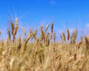 Raport european: Romania are un an agricol mai bun decat 2010 si peste media ultimilor cinci ani
