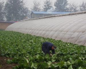 Agricultura ecologica din Romania si-a triplat numarul operatorilor din sistem, in 2011