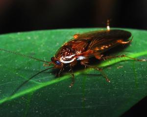 Visul celor care sufera de entomofobie, o lume fara insecte, ar fi un cosmar pentru umanitate
