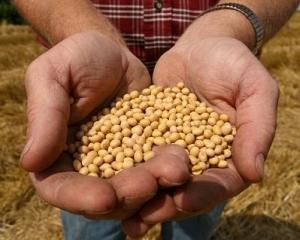 Agricultura: Romania si Polonia, doua tari tot mai importante pentru Monsanto