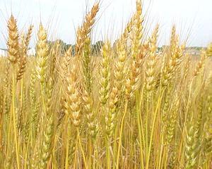Cand industria se balbaie, de ce nu ar vorbi agricultura?