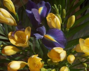 De 8 martie se poarta florile