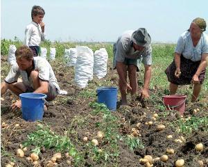 A inceput campania la schemele de sprijin pe suprafata agricola