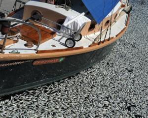 Un milion de pesti morti pe o plaja din California