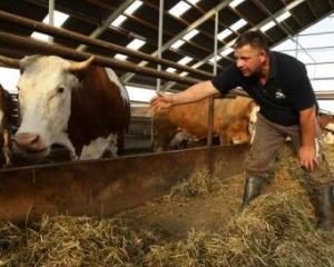 30 de milioane de euro pentru producatorii de lapte si carne de vita din zonele defavorizate