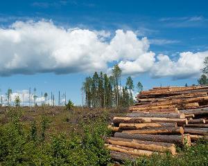 Legislatie europeana: Regulamentul privind exploatarea lemnului