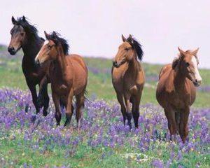 Carnea de cal poate contine ochelari