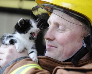 Salvarea a 17.000 de animale i-a costat pe pompierii britanici 4 milioane de euro