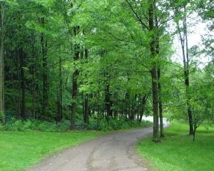 Cadastrul verde al Bucurestiului a costat 9 milioane de lei. Sectorul 1 are cei mai multi arbori