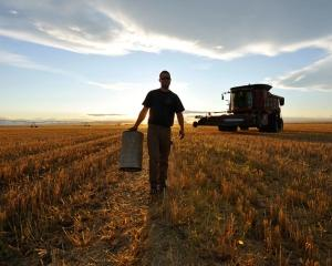 FAO: Preturile globale la alimentele de baza au crescut in februarie