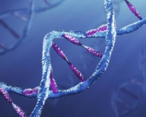 ADN-ul va inlocui hard disk-urile?