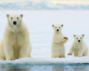 Cercetatorii au gasit specii neobisnuite in Arctica