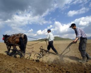 APIA incepe sa deconteze schemele de plati unice pe suprafata pentru anul agricol 2012 - 2013