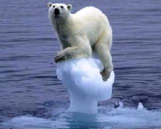 Un urs polar a inotat 9 zile in sir pentru a gasi un petec de gheata