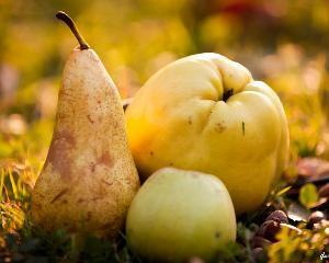 Importurile de mere, pere si gutui: de 20 de ori mai mari decat exporturile