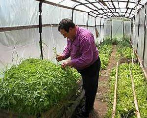 Sfat de la agricultorii de profesie: cultivati cimbru, este afacerea anului!