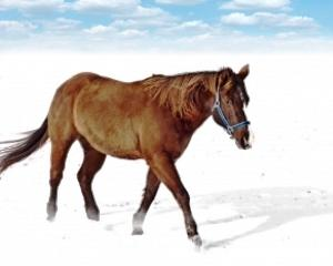 Ministrul Agriculturii: Unele state incearca sa profite in scandalul carnii de cal