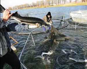 Ministrul Mediului: Pescarii de sturioni trebuie sa beneficieze de compensatii