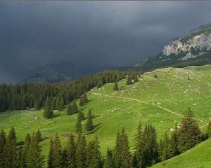 Modificarea Codului Silvic va reduce padurile din Romania