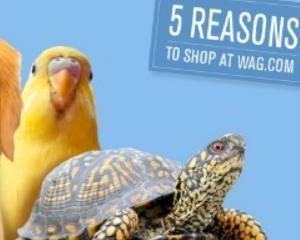 Wag.com: Amazon a lansat un magazin online dedicat animalelor de companie