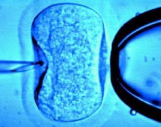 Fertilizarea in vitro, gratuita si in Romania! Vezi aici in ce conditii
