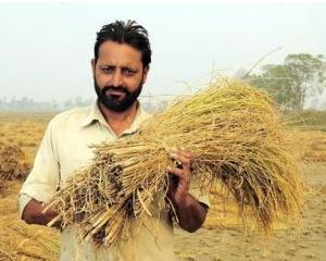 Un razboi mondial in plina desfasurare – batalia pentru cerealele lumii