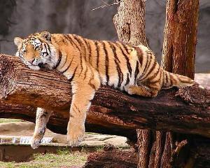 Tigrul asiatic a obosit: Hong Kong, prima scadere economica consemnata dupa 2009