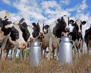 In Uniunea Europeana, productia de lapte nu mai este o afacere