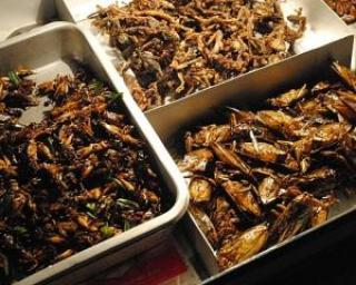 Bug Mac: Gandacii, solutia la foametea globala
