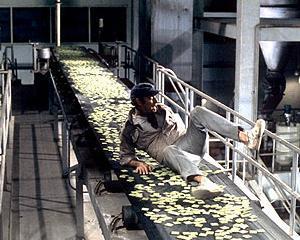Nevoia de hrana a lumii se va dubla pana la mijlocul secolului