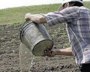 Seceta din aceasta vara a afectat sute de mii de hectare de productie agricola