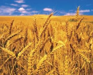 APIA a oferit fermierilor finantari de 2,28 miliarde de euro in intervalul unui an
