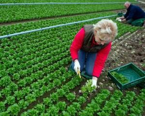 93% dintre agricultori lucreaza pe cont propriu