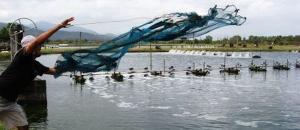 Finantare  de pana la 80.000 euro pentru proiect inovativ in acvacultura