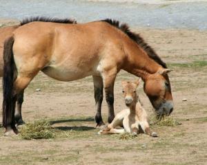 """Geneticienii au descifrat harta genetica a unui cal """"batran"""" de 700.000 de ani"""