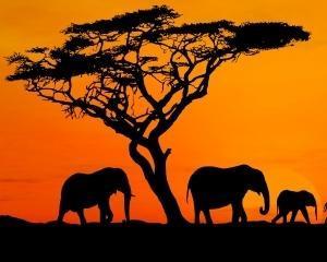 Africa verde