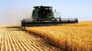 An istoric pentru agricultura romaneasca. Afacerile cu grau si porumb sunt la cote record
