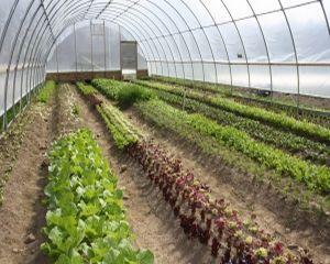 Agricultura ecologica ar putea aduce Romania pe primele locuri in UE