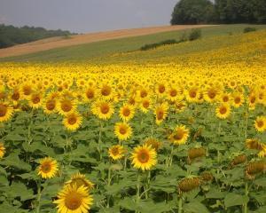 Fondul mutual al agricultorilor ii va scapa de pierderi financiare