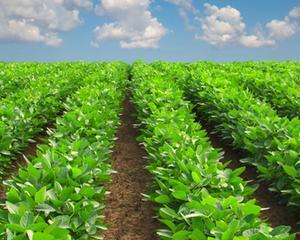 Agricultura Romaniei incepe sa fie competitiva, dupa doua decenii, spune ministrul Daniel Constantin