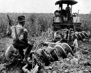 MADR: Peste 70% din culturile agricole sunt in stare foarte buna, iar 30% se prezinta destul de bine