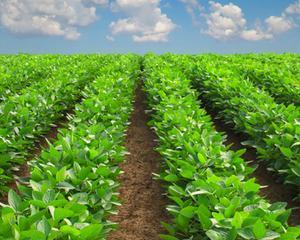 Agricultura: 150 milioane de euro pentru prima sesiune a Masurii 121