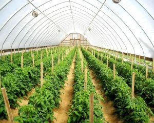 Ministrul Agriculturii anunta suplimentarea fondurilor europene pentru Masurile 125 si 322